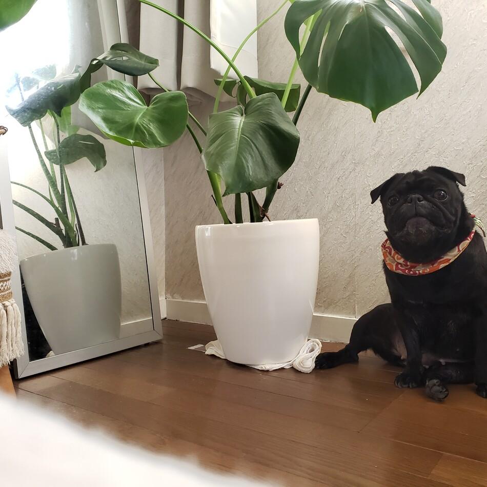 花子のカバー写真