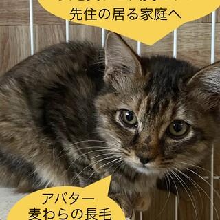 麦わらの中毛猫さんの美猫
