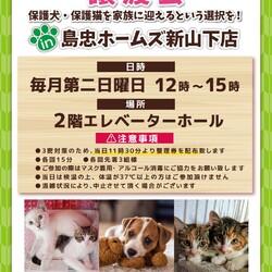 【おーあみ避難所】猫の譲渡会/島忠新山下店