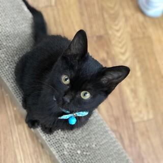 甘えたの黒猫ちゃんトライアルへ
