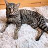 オス猫 3歳 サムネイル2