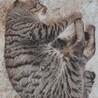 オス猫 3歳 サムネイル3
