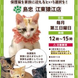 ネコちゃん譲渡会 in 島忠江東猿江店