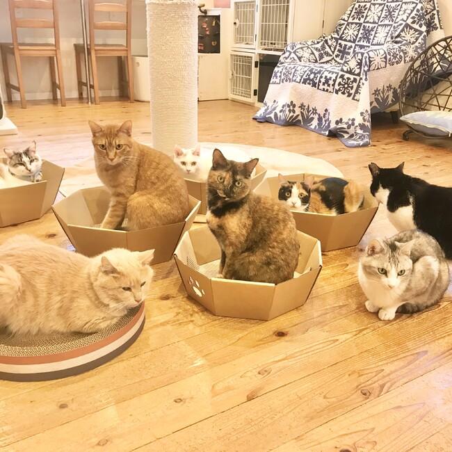 NPO法人動物愛護団体LYSTA・里親募集型保護猫ふれあいサロンOhanaのカバー写真