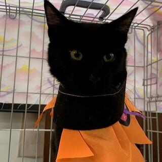 少し怖がりだけど甘えん坊な黒猫君