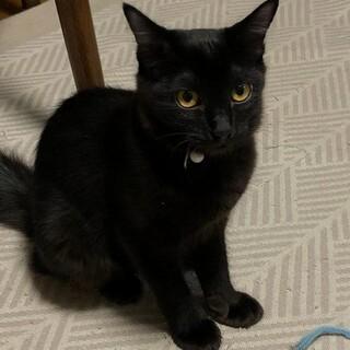 初心者も仲良し2匹なら大丈夫 優しい黒猫ちゃん