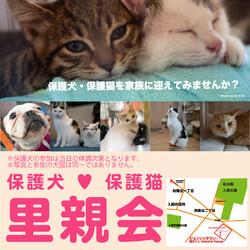 犬猫譲渡会 ☆入間市ジョンソンタウン☆