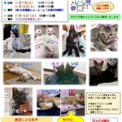 保護猫の譲渡会in名張