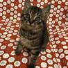 美猫間違い無し、七緒ちゃん。