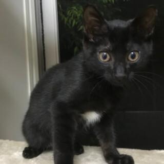 可愛いゴロゴロ黒猫、グリくん♪