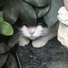 怪我をした野良猫の保護と里親さん探しについて