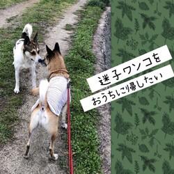迷子ワンコをおうちに返すために→保護!
