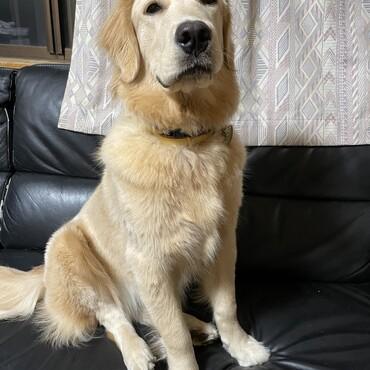 マリンちゃん 8ヶ月健診  30.8kg 完全に大型犬になりました!