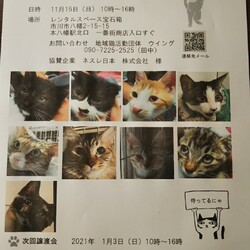 地域猫活動団体ウイング 譲渡会開催
