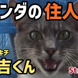 【ベランダの住人】外猫 なご吉くん