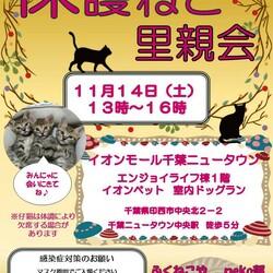 千葉県印西市開催/ふくねこや譲渡会