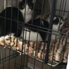 野良猫の兄弟 サムネイル3