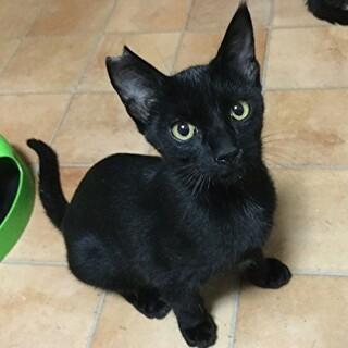 「さくら猫」アラン  3ヶ月