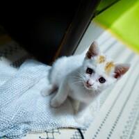 【急募】道路にいた子猫