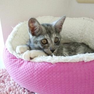 桜ちゃん 4ヶ月半位の女の子