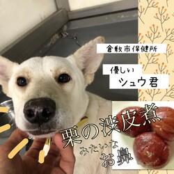 性格ピカイチ、倉敷のシュウ君→譲渡決定!