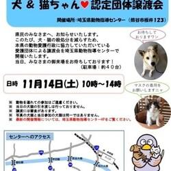犬&猫ちゃん認定団体譲渡会