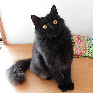 お見合い予定 黒猫ルアナちゃん