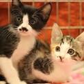 ミルクから育てた兄妹猫