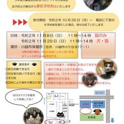 【事前予約制】保護猫&保護犬譲渡会 IN 川越市保健所