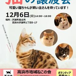 ☆猫の譲渡会☆高浜市地域ねこの会