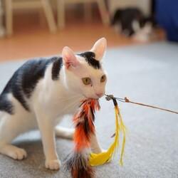 猫じゃらし命♡ごま