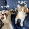 おっとりした甘えん坊さん☆みーみちゃん サムネイル6