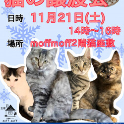 保護猫カフェで譲渡会!