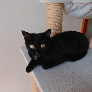 【急募】優しくて可愛いお腹が白い黒猫ちゃん