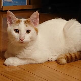 【募集一時停止】つぶらな瞳のイケメン子猫♂