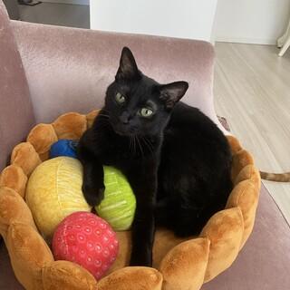 ♂の黒猫の里親募集です