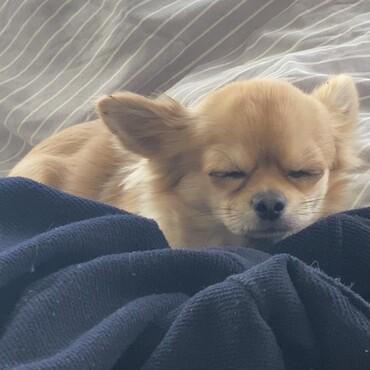 眠くてもギリギリまで寝ません(笑)