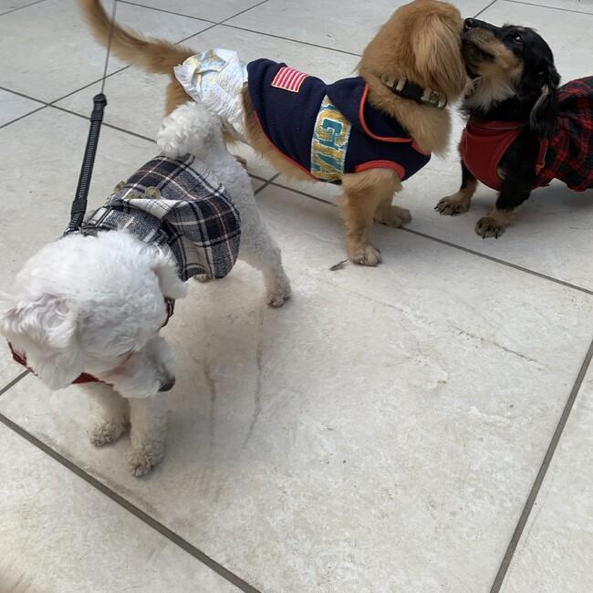 dog step partner AKIのカバー写真