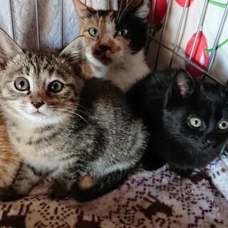 生後1~2ヶ月の子猫3匹+中猫1匹を保護しています