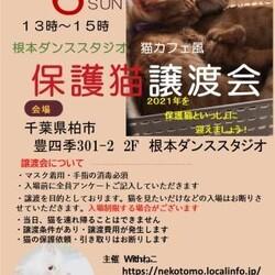 12/6(日)根本ダンススタジオ猫カフェ風保護猫譲渡会
