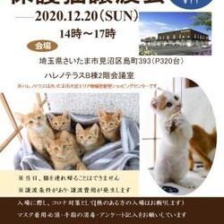 12/20(日)ハレノテラス保護猫譲渡会