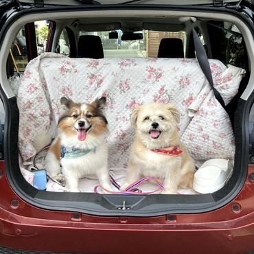 ひめもごんも車でお出かけするのが大好き