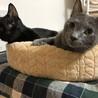 甘えん坊の黒猫トンボ君 サムネイル2