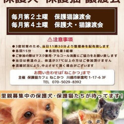 保護犬 保護猫 譲渡会inホームズさいたま中央店