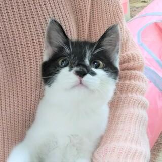 先輩猫にも飛びついちゃう かわいいカリン3ヵ月