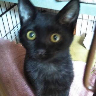 黒猫3兄弟♡一番慣れてるララちゃんです!