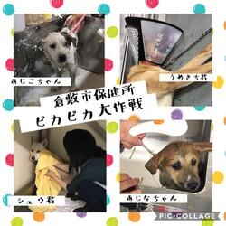 倉敷市保健所ピカピカ大作戦