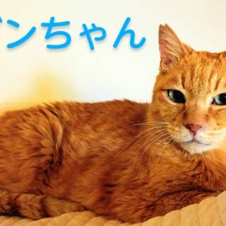 甘えん坊の美猫がんちゃん