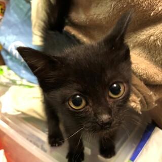 奇跡の生還をした黒猫です。