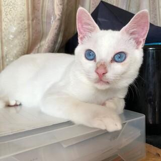 猫飼育経験豊富な方求む(1匹飼い限定)